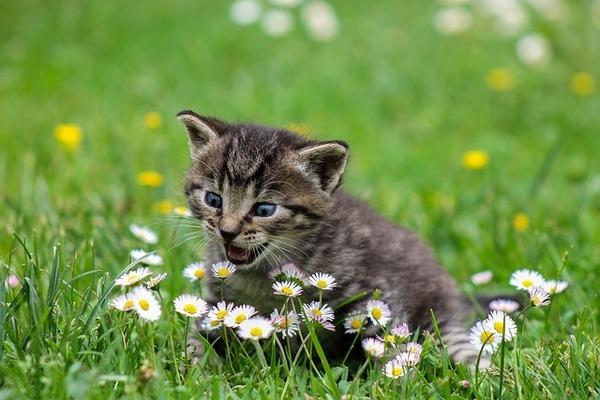 二人目妊活で妊娠しやすくするならアロマを使った鼻力アップ作戦を遂行せよ。鼻の力がある猫。