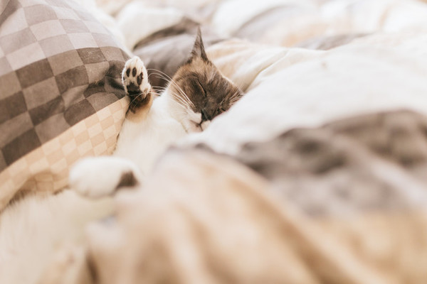 二人目妊活時に妊娠しやすくするには、布の匂いを嗅いで、嗅覚を鋭くすると良い。布の中にいる猫。