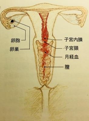 多数の激しい子宮の収縮により、子宮が緊張し、血行が悪くなる。それが生理痛の原因です。妊活でよく飲まれるルイボスティーがその生理痛を緩和させる効果や効能があるのか説明します。