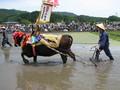 [広島]壬生の花牛