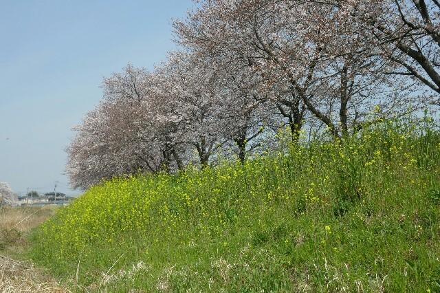 f:id:henrymiura:20170405205053j:image