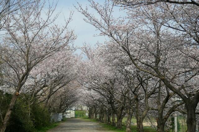 f:id:henrymiura:20170405205119j:image