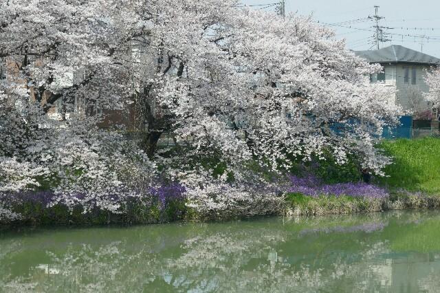 f:id:henrymiura:20170405205303j:image