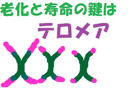 f:id:hentekomura:20170825193325p:plain