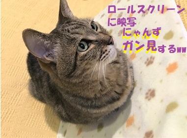 f:id:hentekomura:20180316153903j:plain
