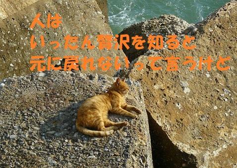 f:id:hentekomura:20180321165041j:plain