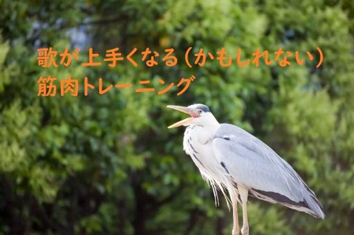 f:id:hentekomura:20181104153247j:plain