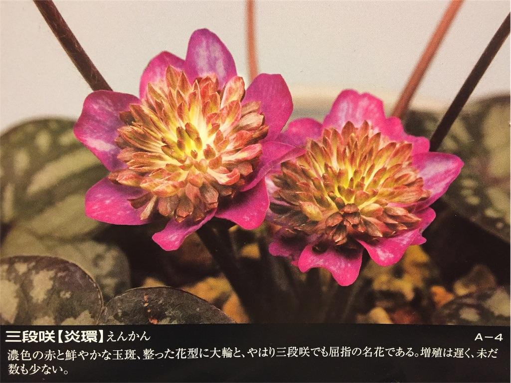 f:id:hepatica_japonica:20170112192112j:image