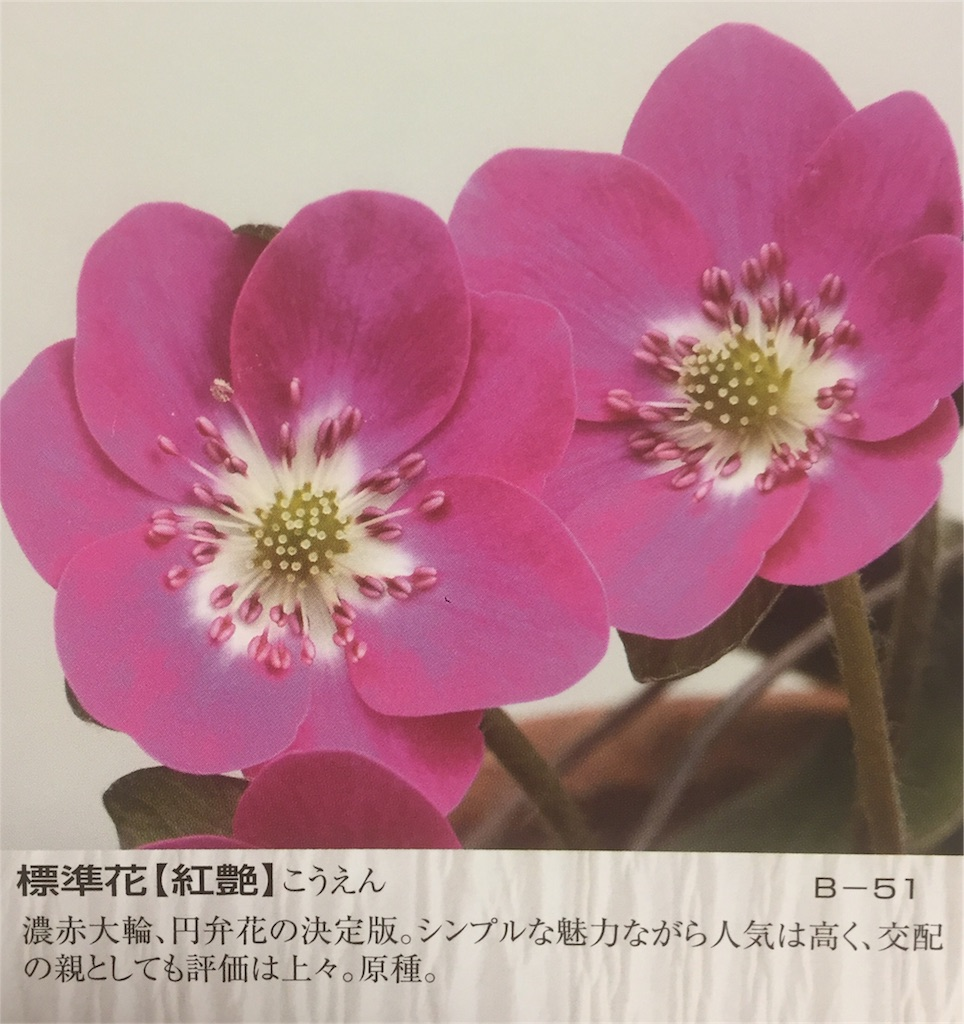 f:id:hepatica_japonica:20170112204203j:image