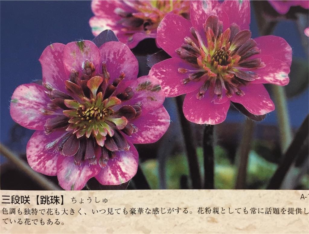 f:id:hepatica_japonica:20170118233411j:image