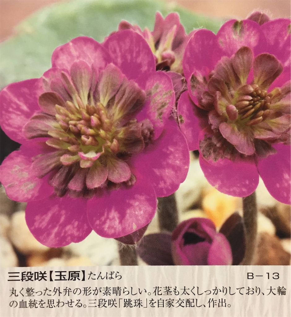 f:id:hepatica_japonica:20170118233501j:image