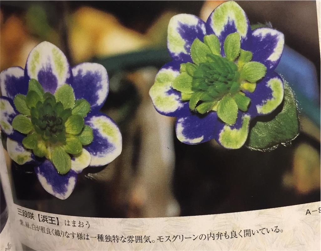 f:id:hepatica_japonica:20170119190937j:image