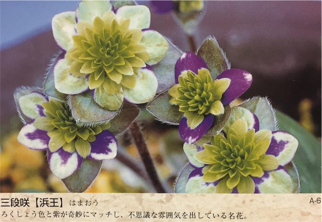 f:id:hepatica_japonica:20170119190958j:image