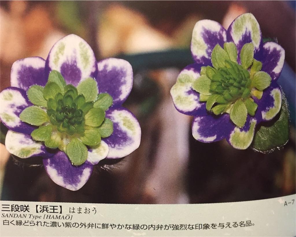 f:id:hepatica_japonica:20170119191010j:image