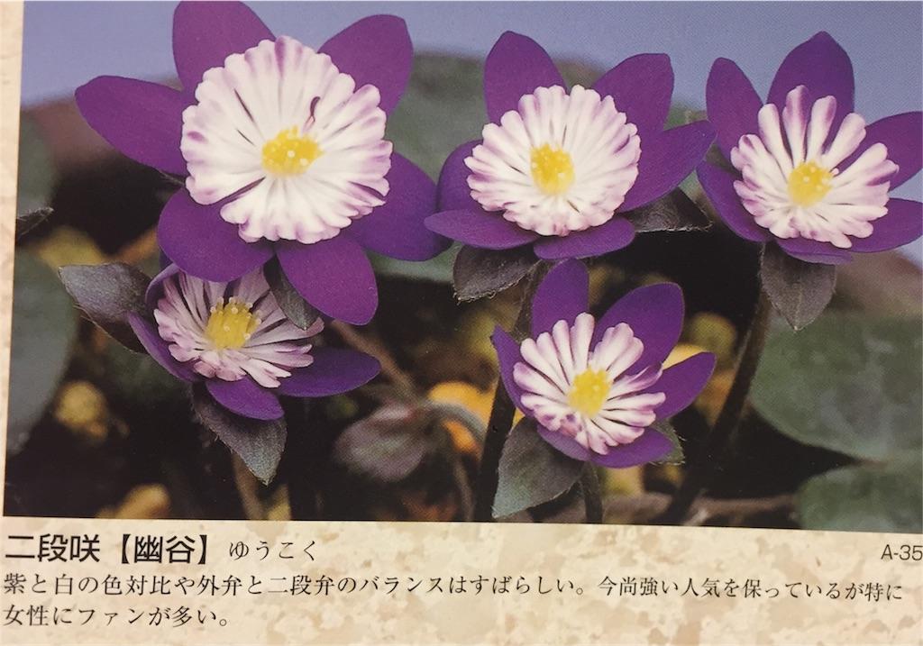 f:id:hepatica_japonica:20170126204401j:image