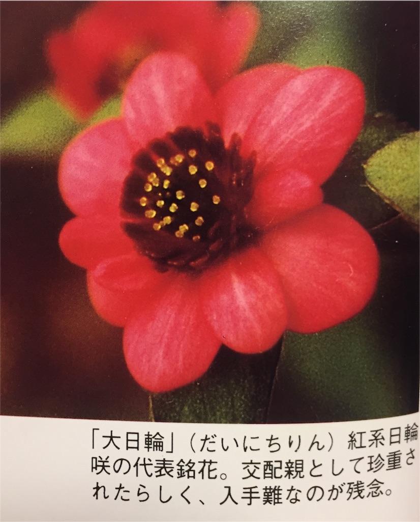 f:id:hepatica_japonica:20170130200341j:image