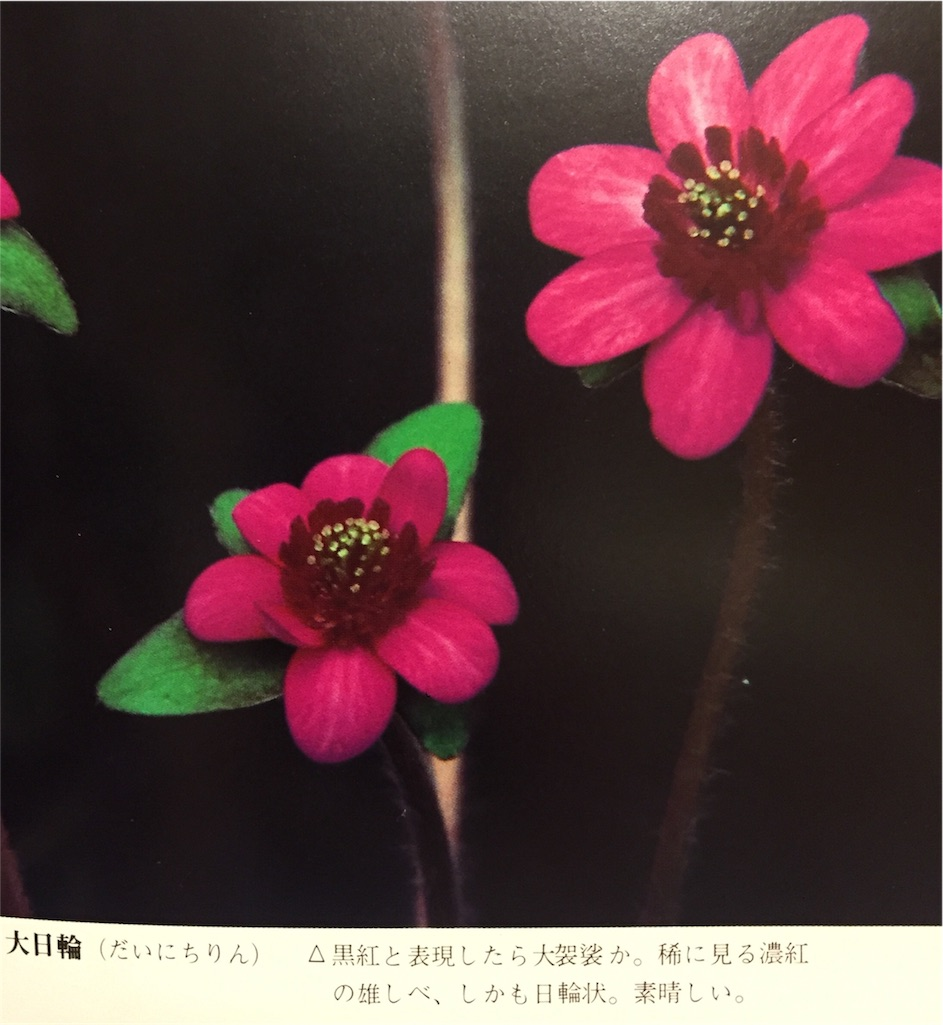 f:id:hepatica_japonica:20170130203043j:image
