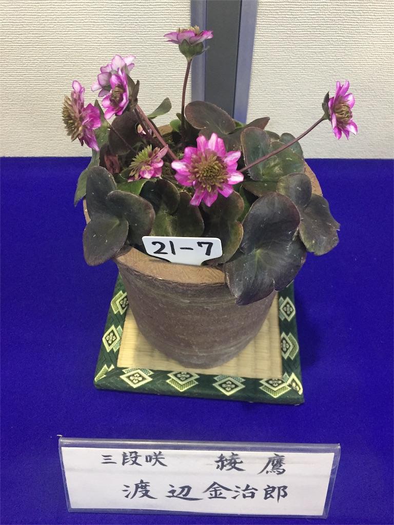 f:id:hepatica_japonica:20170218162410j:image