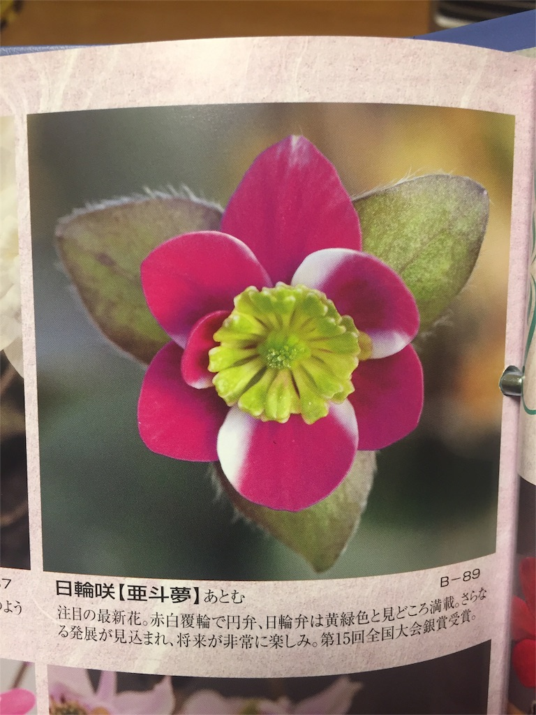 f:id:hepatica_japonica:20170228224407j:image