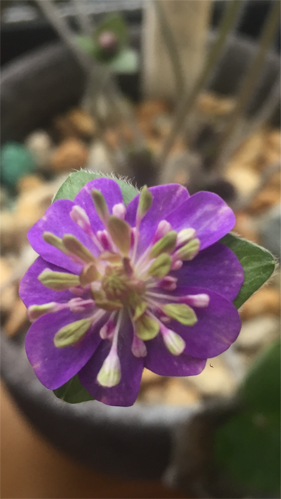 f:id:hepatica_japonica:20170314121655p:image