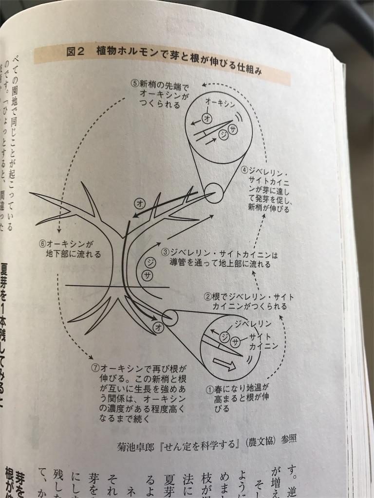 f:id:hepatica_japonica:20170707000329j:image