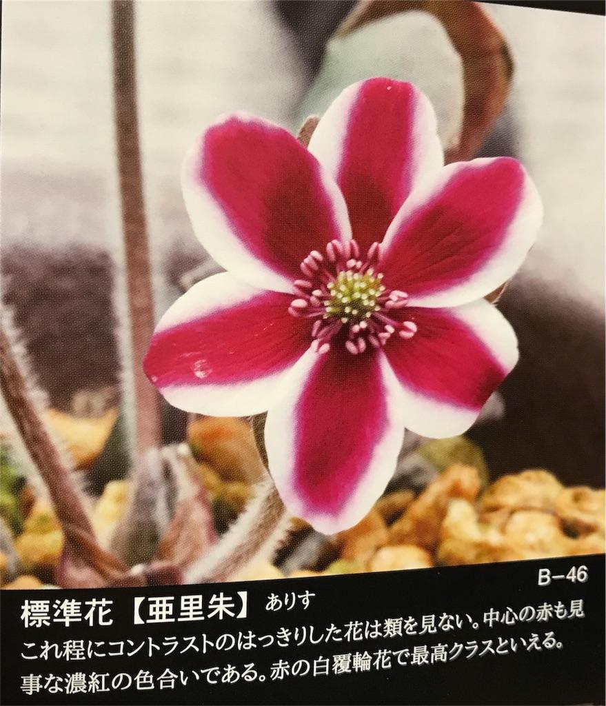 f:id:hepatica_japonica:20180212212936j:image