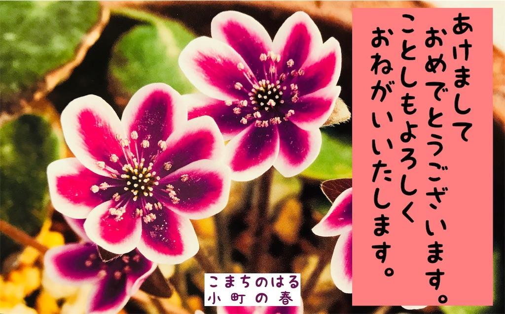 f:id:hepatica_japonica:20190101120302j:image
