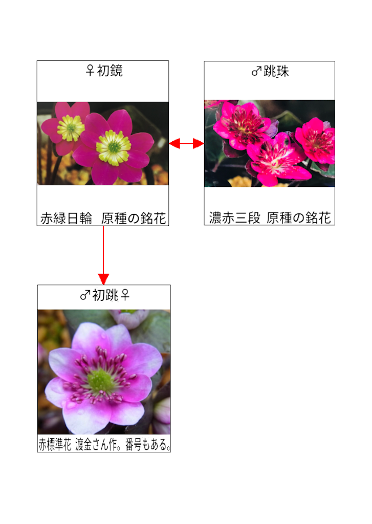 f:id:hepatica_japonica:20190119232019p:image