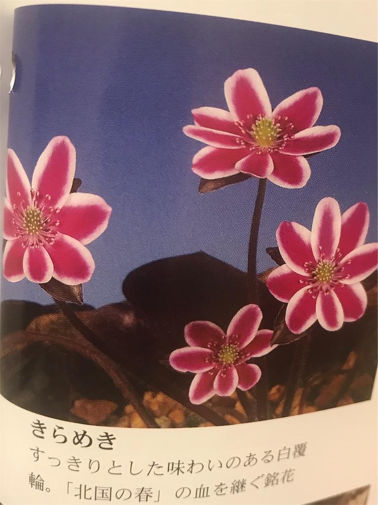 f:id:hepatica_japonica:20190130223449j:image