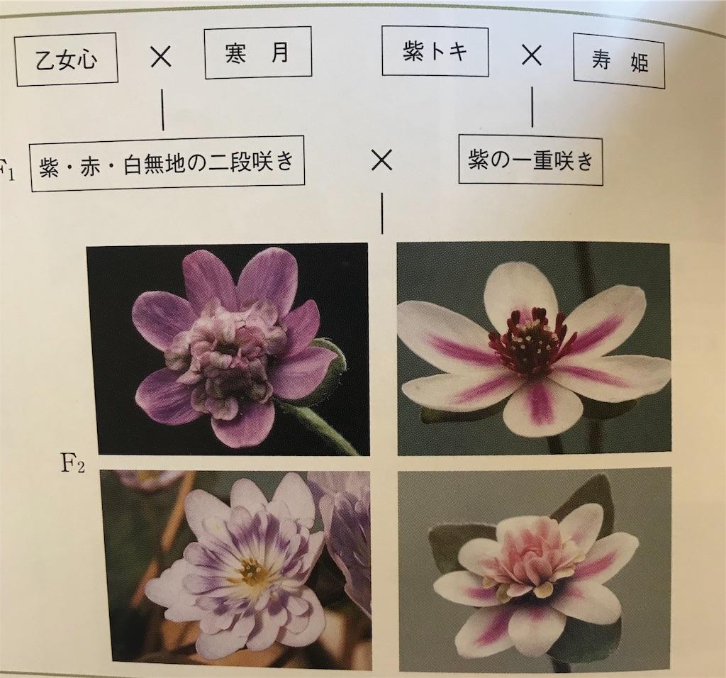 f:id:hepatica_japonica:20190216144150j:image