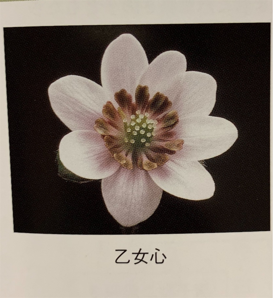 f:id:hepatica_japonica:20200426211850j:image