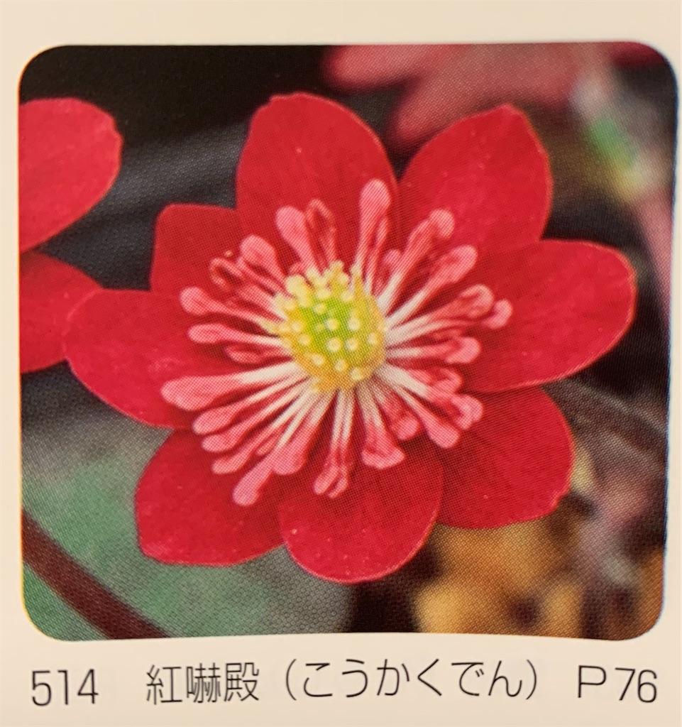 f:id:hepatica_japonica:20200426211855j:image