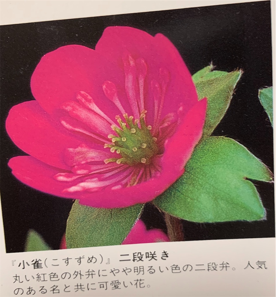 f:id:hepatica_japonica:20200426211901j:image