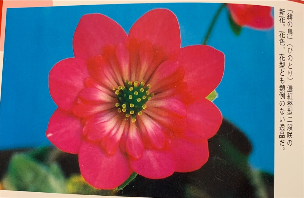 f:id:hepatica_japonica:20200426211904j:image