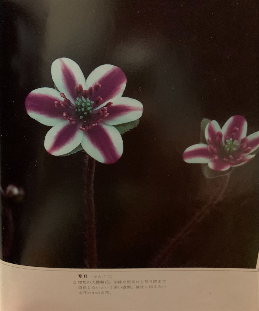 f:id:hepatica_japonica:20200426211913j:image