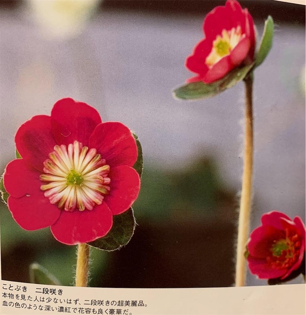 f:id:hepatica_japonica:20200426211916j:image
