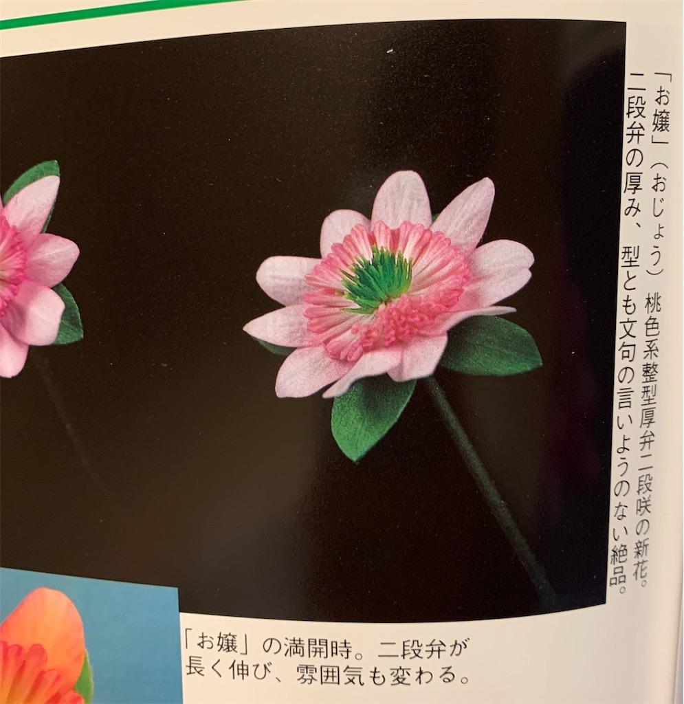 f:id:hepatica_japonica:20200426211920j:image