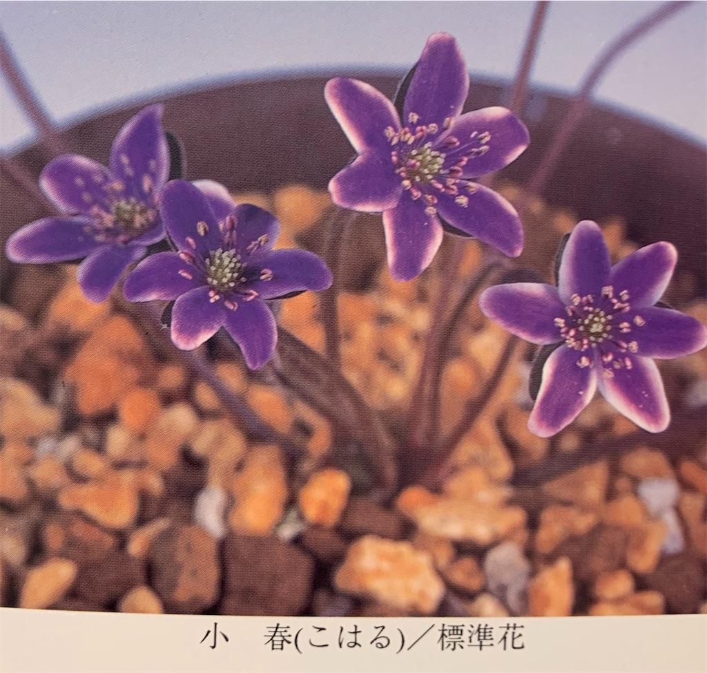 f:id:hepatica_japonica:20200426211924j:image