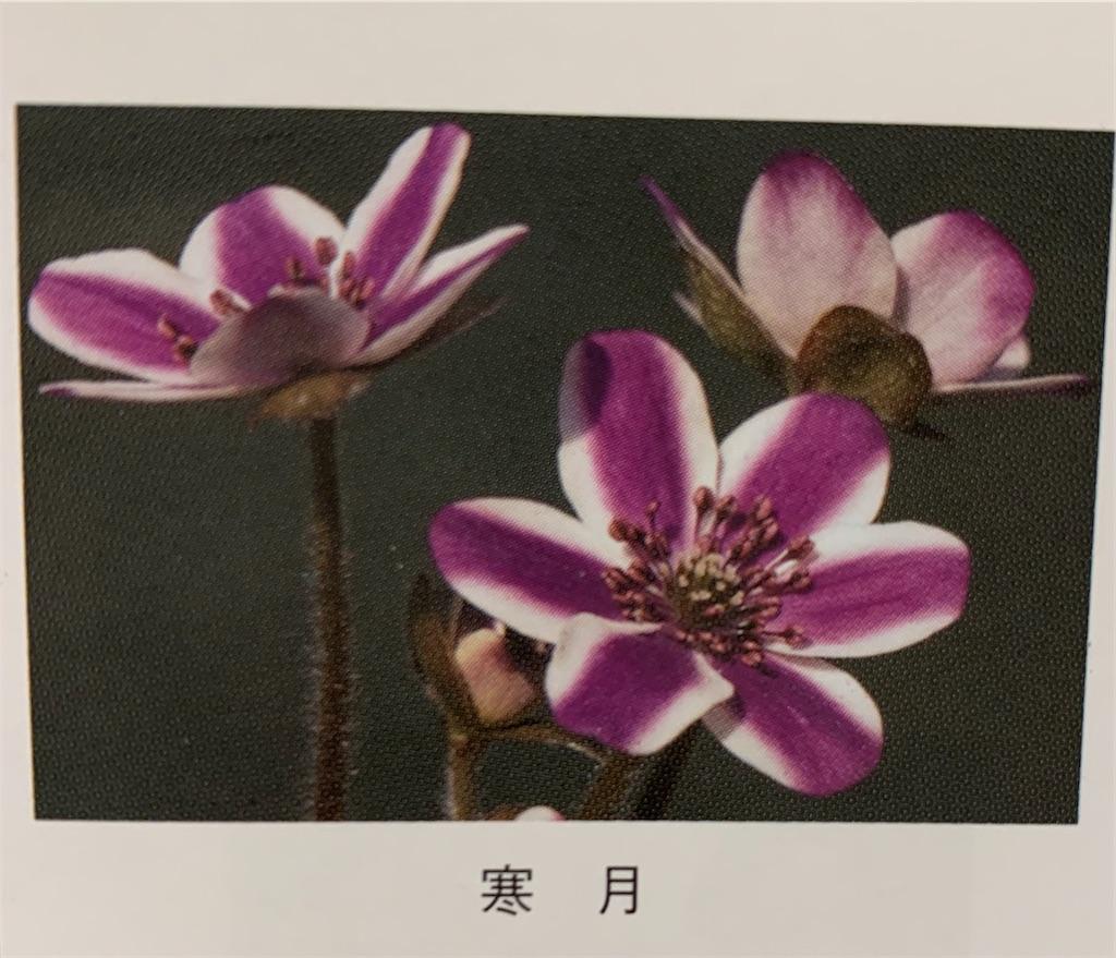 f:id:hepatica_japonica:20200426211928j:image