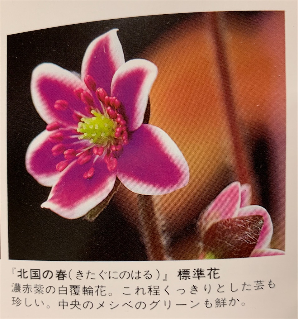 f:id:hepatica_japonica:20200426211934j:image