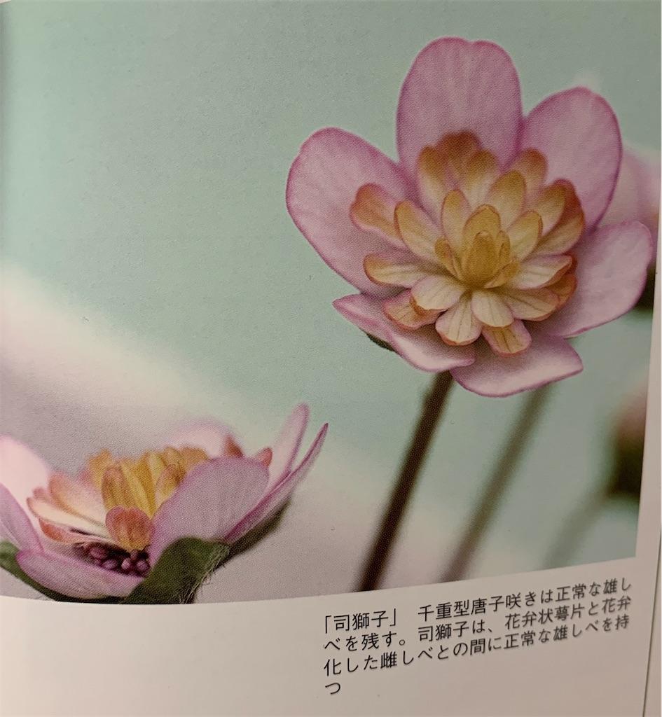 f:id:hepatica_japonica:20200426211941j:image