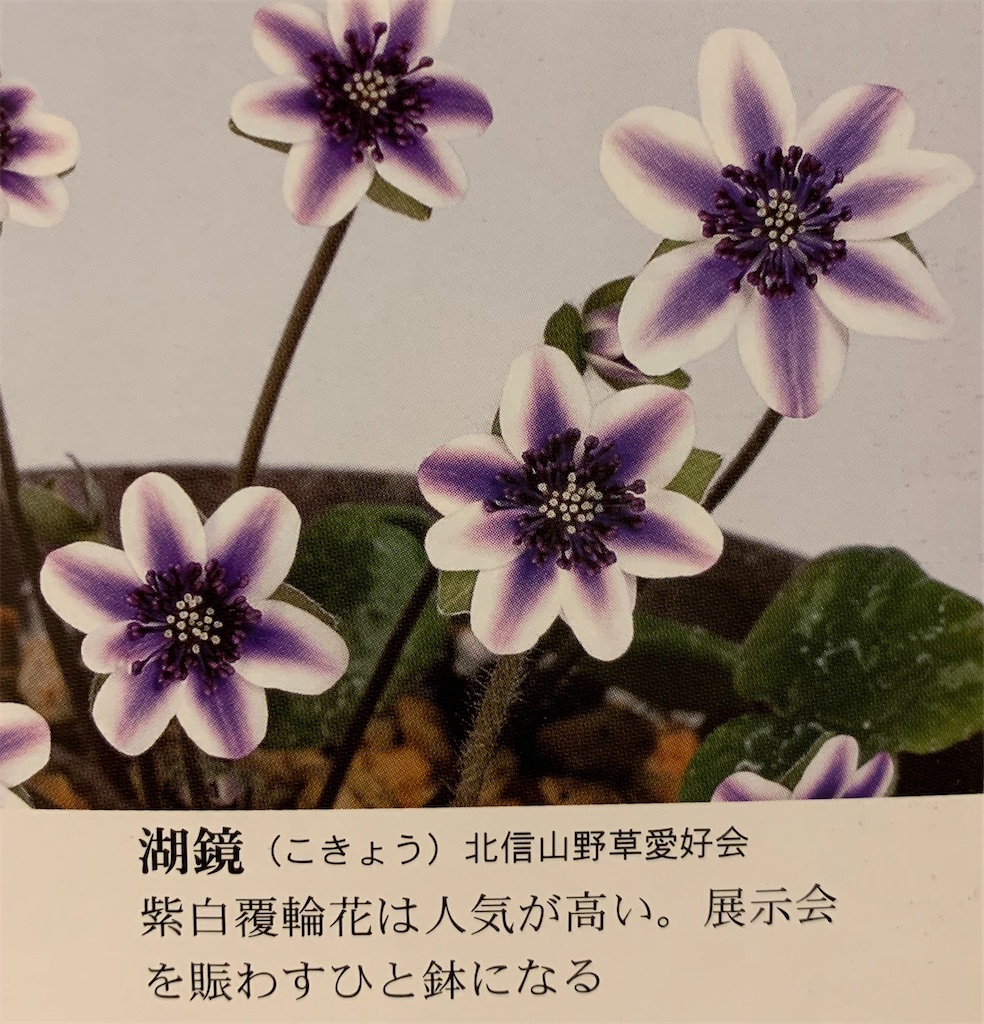 f:id:hepatica_japonica:20200426211944j:image