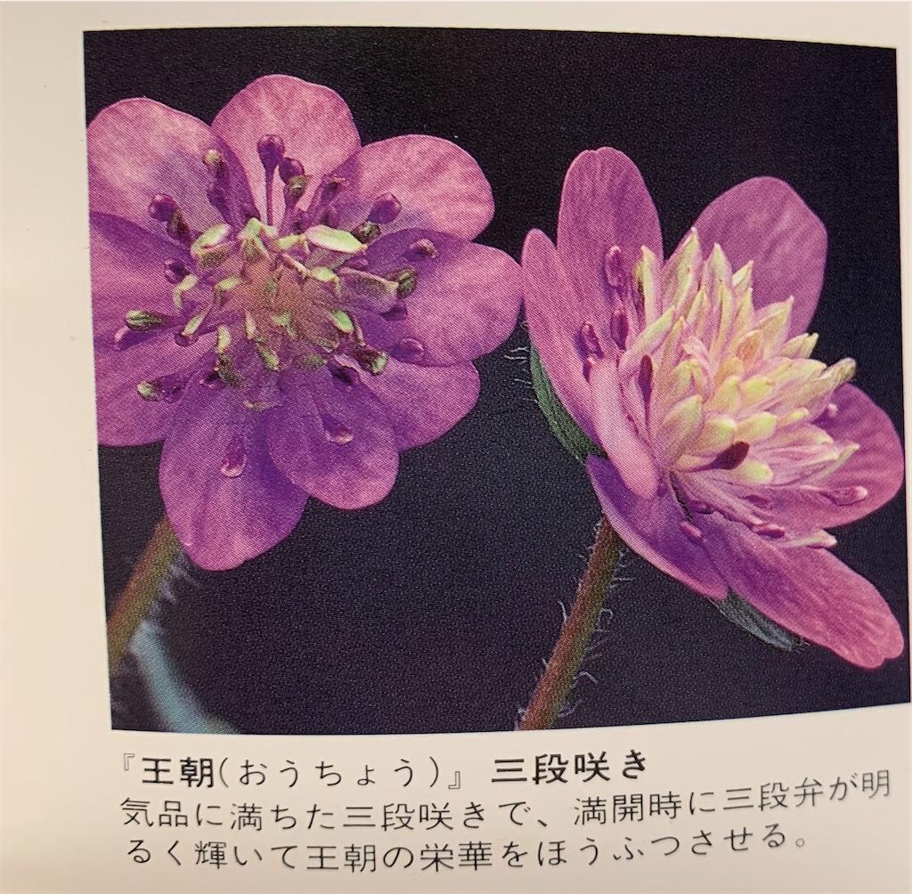 f:id:hepatica_japonica:20200426211948j:image