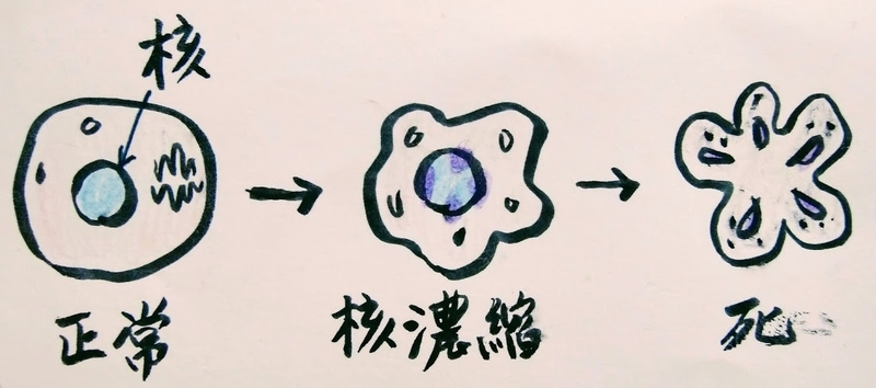 f:id:herakoimFujito:20210124163645j:plain