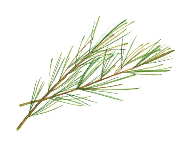 f:id:herballife:20170427192004j:plain