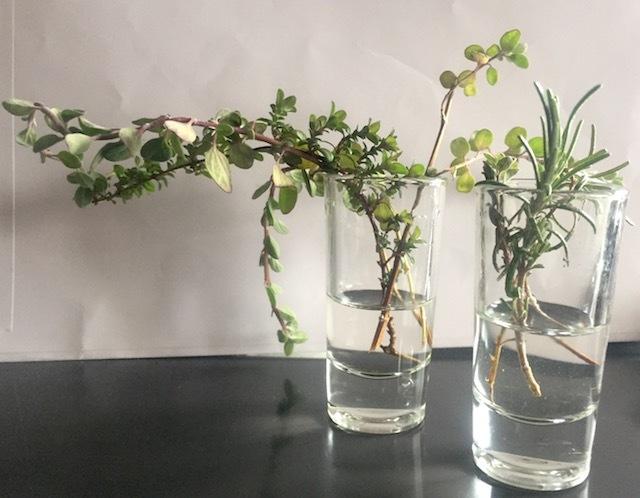 挿し木用3種1