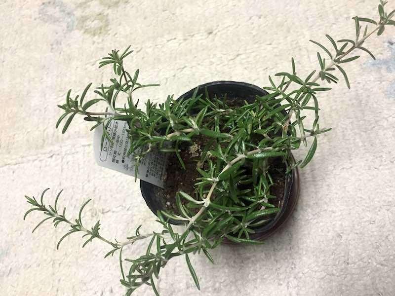 f:id:herblife:20170627103421j:plain