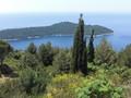 [アドリア海]エニシダと糸杉