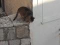 [ドブロブニク][ネコ]城壁めぐり