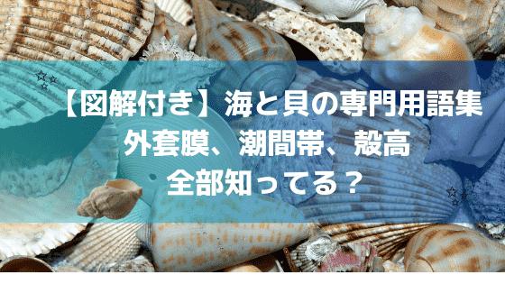 海と貝の専門用語集! 外套膜、潮間帯、殻高等